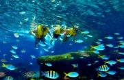 Các trường Đào tạo ngành Khí tượng Thủy Văn - Hải dương học